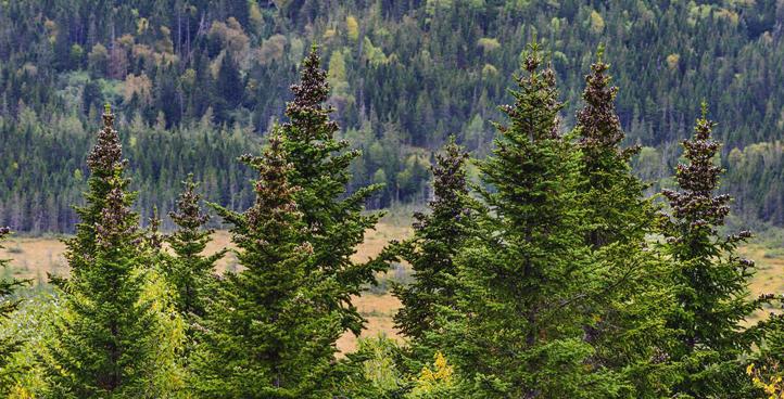 Породные особенности древесины